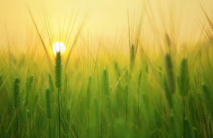 Турбуватися про майбутній урожай
